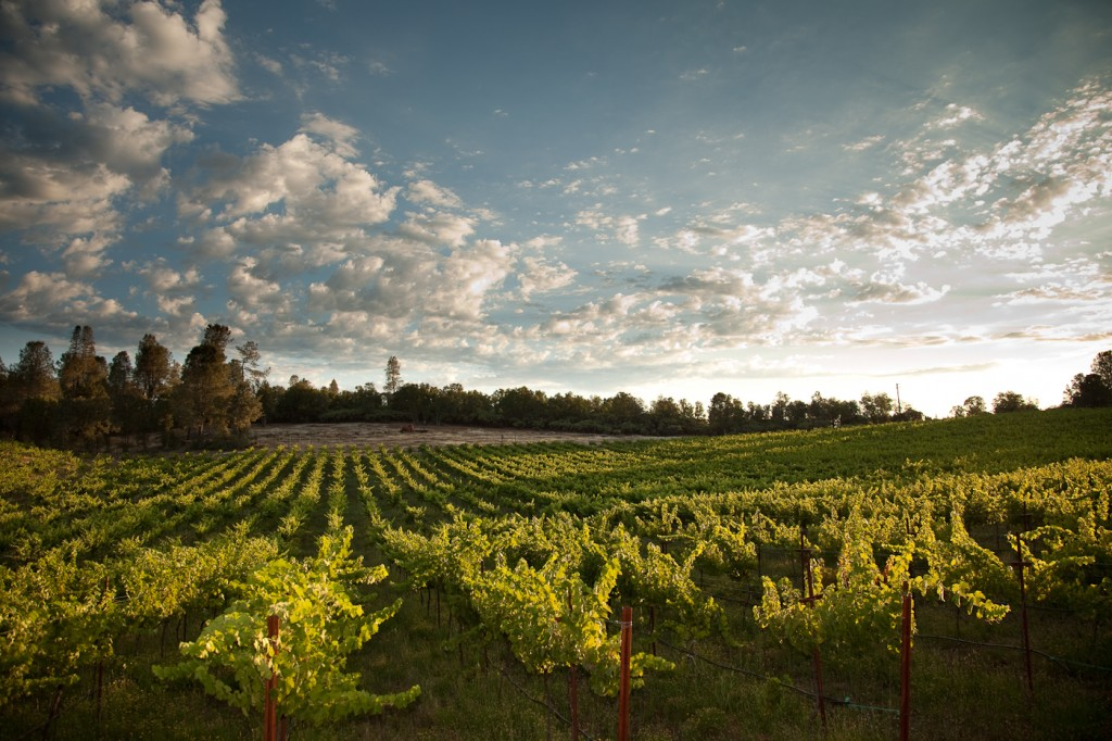 Northern California Wineries